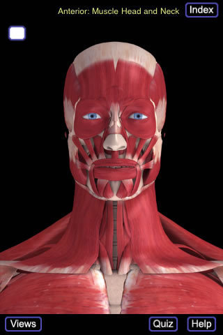 3D4Medical's Muscle System (Head And Neck)